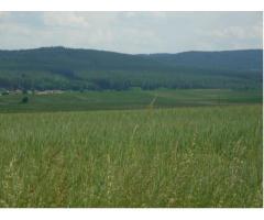 Участок земли площадью 27868м2  в городе Горжовице